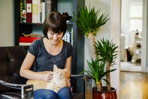 The Living Room Or Not Cat by Understanding The Purring Of Cats