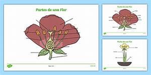 Partes De Una Flor Parts Of A Plant And Flower Labelling