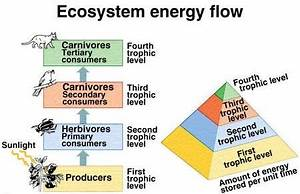 2 Answers - How do living organisms gain and use mass ...
