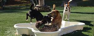 dog daycare club mutts tuscaloosa northport al With dog day care prices