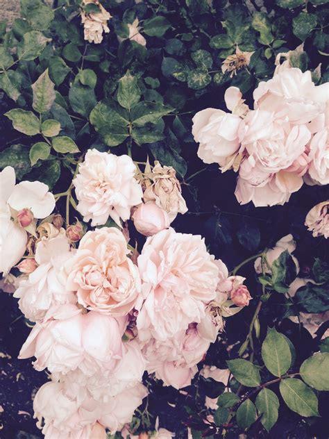 Pinterest Cosmicislander You Know Flowers Planting
