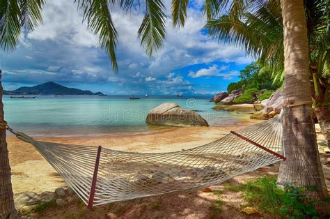 tropical paradise hammock   lovely beach