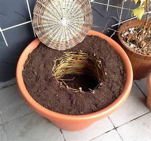 Kompost Für Balkon : kompost auf dem balkon ~ A.2002-acura-tl-radio.info Haus und Dekorationen