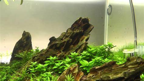 Aquascape Plants For Sale by Ohko Cherry Shrimp