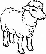 Sheep Coloring Outline Pages Drawing Male Line Alpha Colouring Cartoon Printable Bighorn Christmas Template Farm Minecraft Face Coloringsky Animals Sheets sketch template