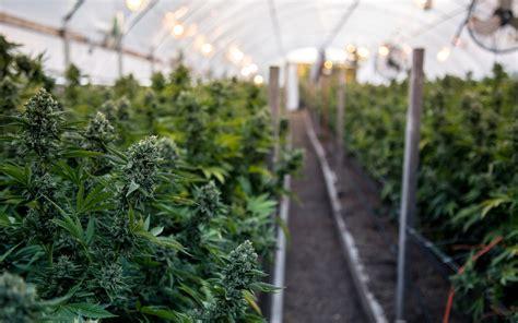 California Farmers Group Files Lawsuit To Block Mega-grows