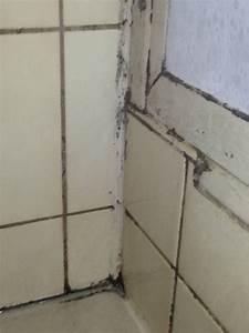Fugenschimmel Im Bad Entfernen : schimmel vermeiden ganz einfach tipps und tricks ~ Lizthompson.info Haus und Dekorationen
