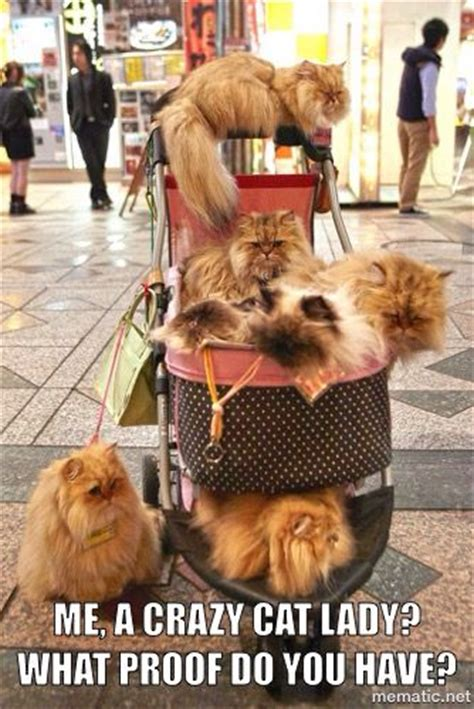 Crazy Dog Lady Meme - 17 images about crazy cat lady on pinterest cats city girl and british