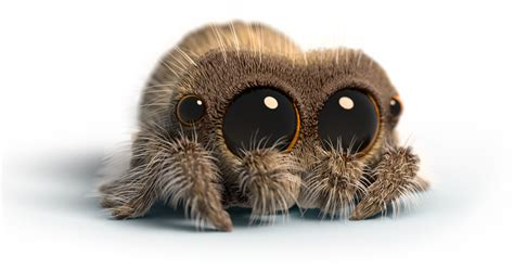 youtubes favorite creature lucas  spider