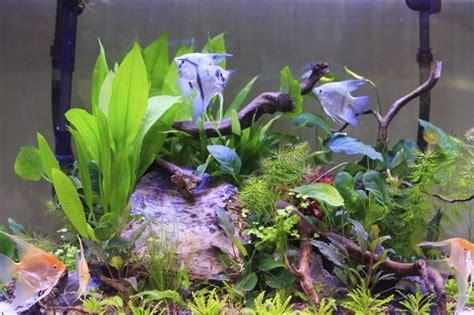 clean artificial aquarium plants cuteness