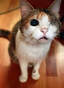 Kann Der Vermieter Katzen Verbieten : darf ein vermieter katzen verbieten vermieter darf haltung von katzen nicht verbieten ~ Buech-reservation.com Haus und Dekorationen