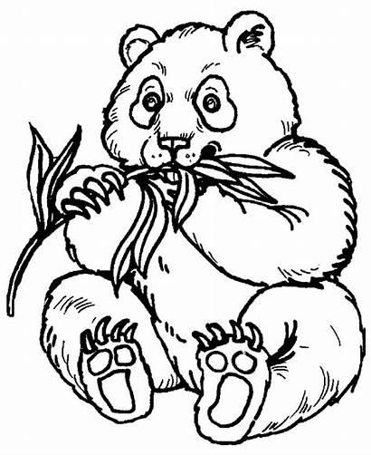 Coloring Animals Zoo Pages Panda Bear
