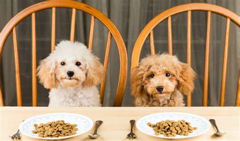 dog food pet circle