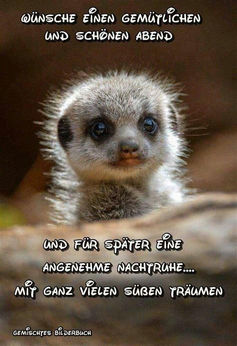pin von thorhildur sigurdardottir auf animals  love