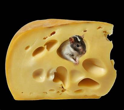 Mouse Cheese Funny Cell Phone Mobile