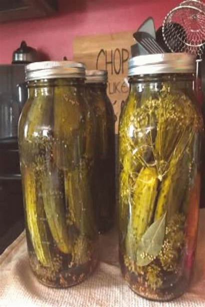 Dill Pickle Recipe Pickles Garlic Traditional Canning