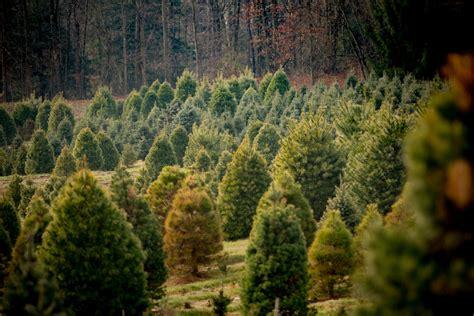 rare tree nursery perth best idea garden