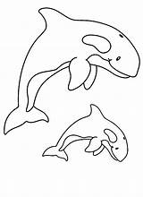 Whale Coloring Killer Whales Printable Clipart Orca Awesome Template Drawing Kidsplaycolor Sperm Sheets Realalistic Shark Library Animals Getcolorings Getdrawings Visit sketch template