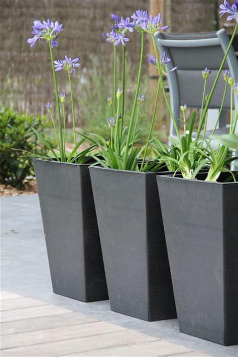 exotische potplanten met bloem planten in pot buiten zq31 belbin info