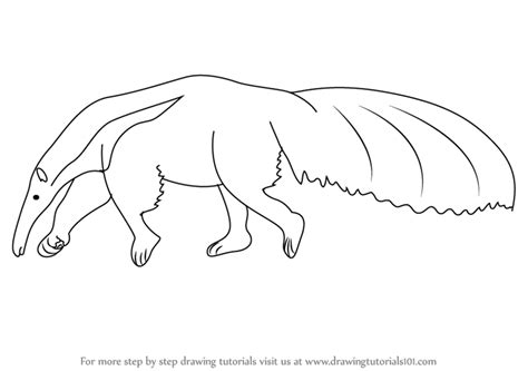 learn   draw  anteater wild animals step  step