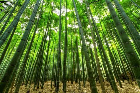Bauen Mit Bambus In Heim Und Garten Japanweltde