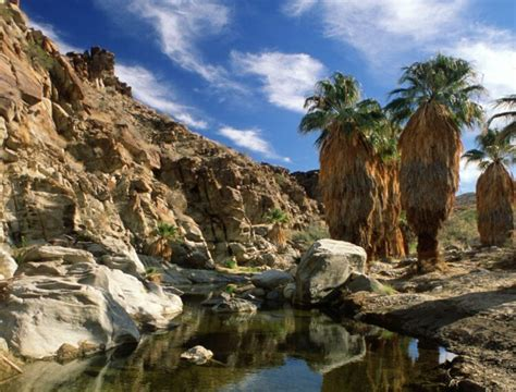 indian canyons visit palm springs