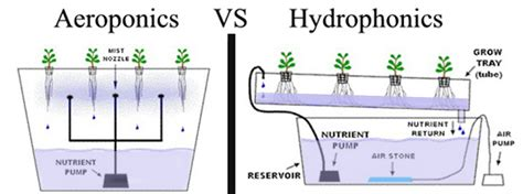 Aeroponic And Hydroponic Farms