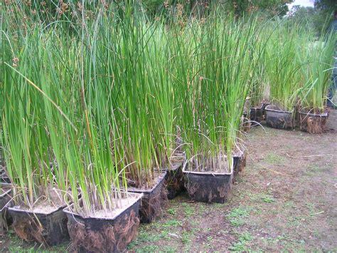plante pour bassin exterieur helvia co