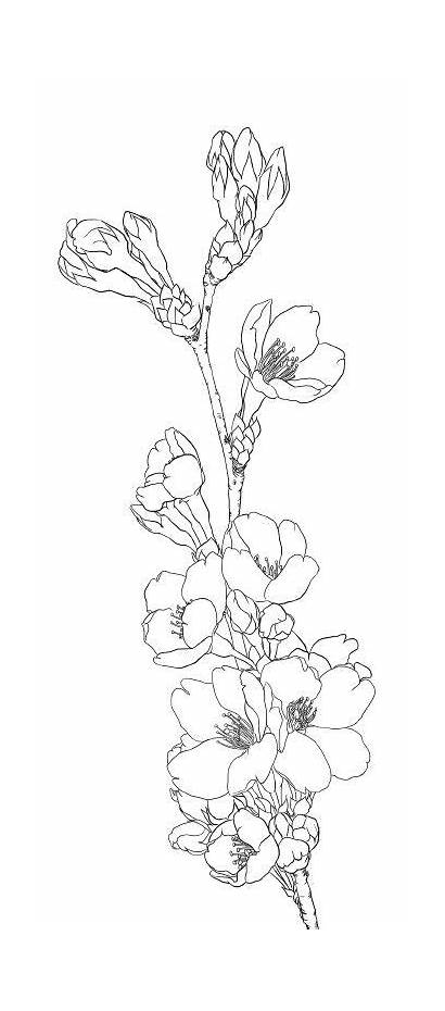 Coloring Pages Teens Flower Flowers Drawing Blossom