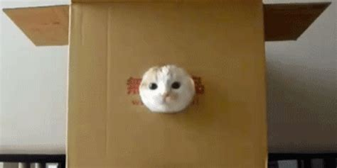 cat finder cat gif find on giphy