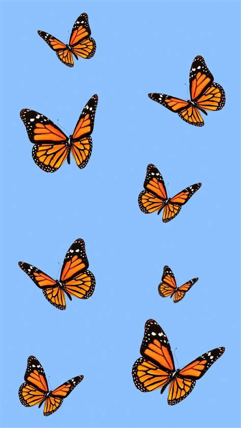 esthtique iphone wallpaper monarchbutterfly butterfly