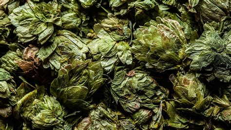 punch  mosaic  beers hottest hop