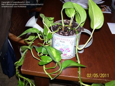 Plant Identification: CLOSED: HousePlant ID and Care, 1 by