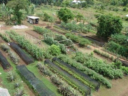 organic kitchen gardening биоземеделие био продукти био храни екология здраве 1228
