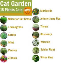 cat safe plants top 10 tips of how to create a cat friendly garden