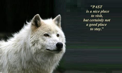 Animal Wallpapers With Quotes - wolf spirit quotes and sayings quotesgram