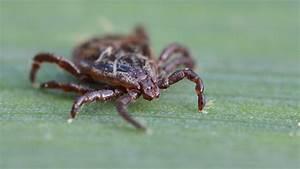 Bestes Mittel Gegen Mücken : stiftung warentest diese zehn mittel gegen zecken und m cken sind gut ~ Whattoseeinmadrid.com Haus und Dekorationen