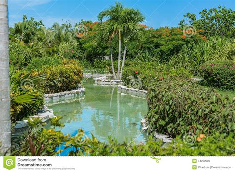 view of home tropical garden river with various pl stock
