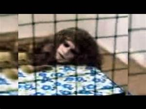 Real Human Animal Hybrid Experiments - YouTube