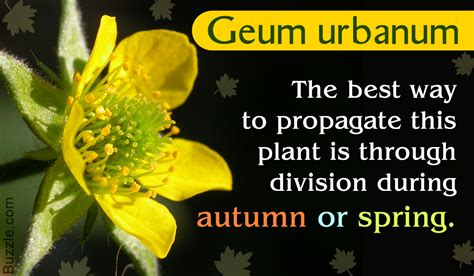 interesting plants to grow learn all about geum plants interesting facts and growing tips
