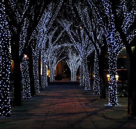 light up outdoor trees christmas christmas lights merry events 2011 rsvp design services