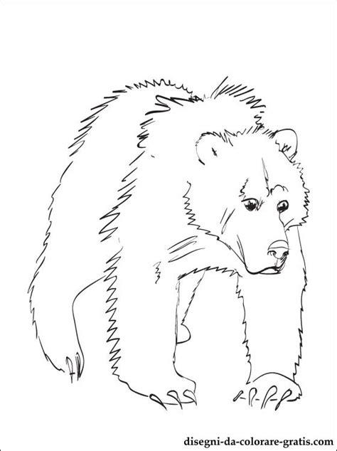 disegni da colorare lorso grizzly disegni da colorare
