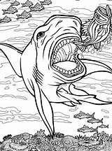 Quiver Coloring Shark App Sharks Tiger Drawing Printable Ocean Getdrawings Dover Getcolorings Colouring Dwellers Animals Sheet Vol Archives Colorings Lineart sketch template