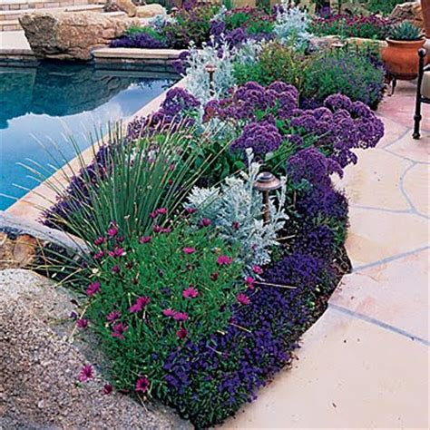 great border plants pixtal peep bulbs for summer bloom