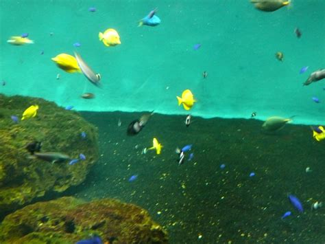 aquarium d olonne 224 l aquarium des sables d olonne