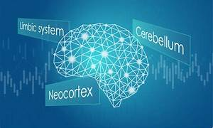 A Guide To Understanding Your Trading Brain