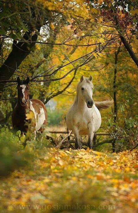 Horse Beautiful Autumn Country Scenes