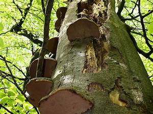 Bilder Vom Wald : xylobius lebensraum bewahren wald holz ~ Yasmunasinghe.com Haus und Dekorationen