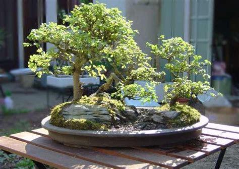 de roche pour pot bonsai em juiz de fora bruno gomes abril 2011