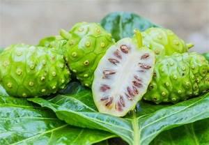 Morinda Citrifolia (Noni) Fruit Extract - Vine Vera Reviews and Giveaways Morinda